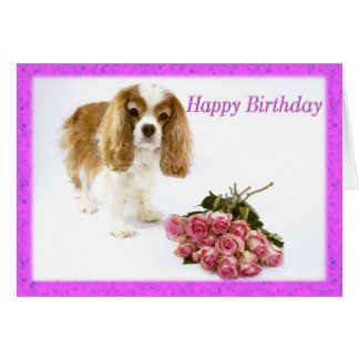 Happy Birthday Cavalier King Charles Spaniel Card