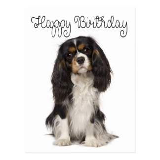 [Image: happy_birthday_cavalier_king_charles_spa...vr_324.jpg]