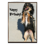Happy birthday Chihuahua greeting card