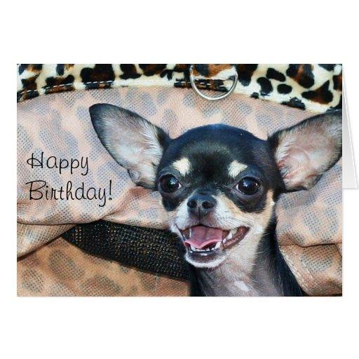 Happy Birthday Chihuahua greeting card