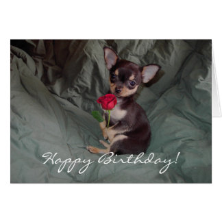 Happy Birthday Chihuahua Puppy Card Greeting Card