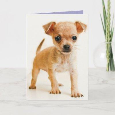 Happy Birthday Chihuahua Puppy Dog Mom Puppies Card Zazzle Com