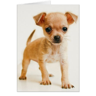 Happy Birthday Chihuahua Puppy Dog Greeting Card