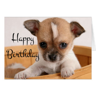 Happy Birthday Chihuahua Puppy Dog - Verse Card