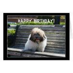 Happy Birthday Coton de Tulear Puppy greeting card