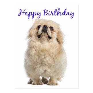 Happy Birthday Cream Pekingese Puppy Dog Blue Postcard