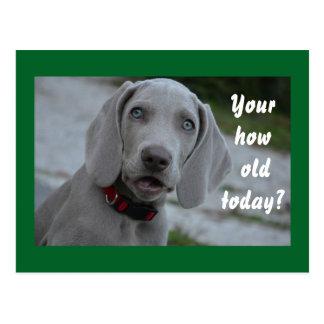 Happy Birthday Dog Humor Postcard
