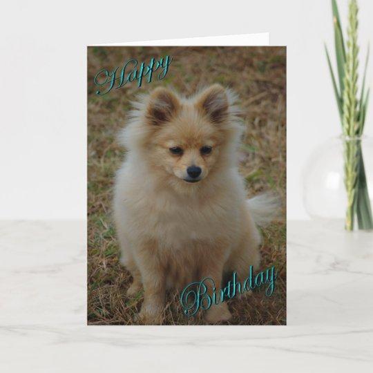 Happy Birthday Dog Pomeranian Birthday Wishes Card Zazzlecom