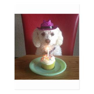 Happy birthday. Dogsimage.jpg Postcard