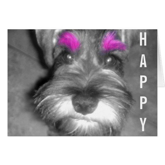 happy birthday dude miniature schnauzer puppy card