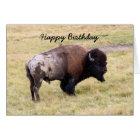 Happy Birthday, Dusty Bison Bull Humor Card