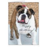 Happy Birthday English Bulldog greeting card
