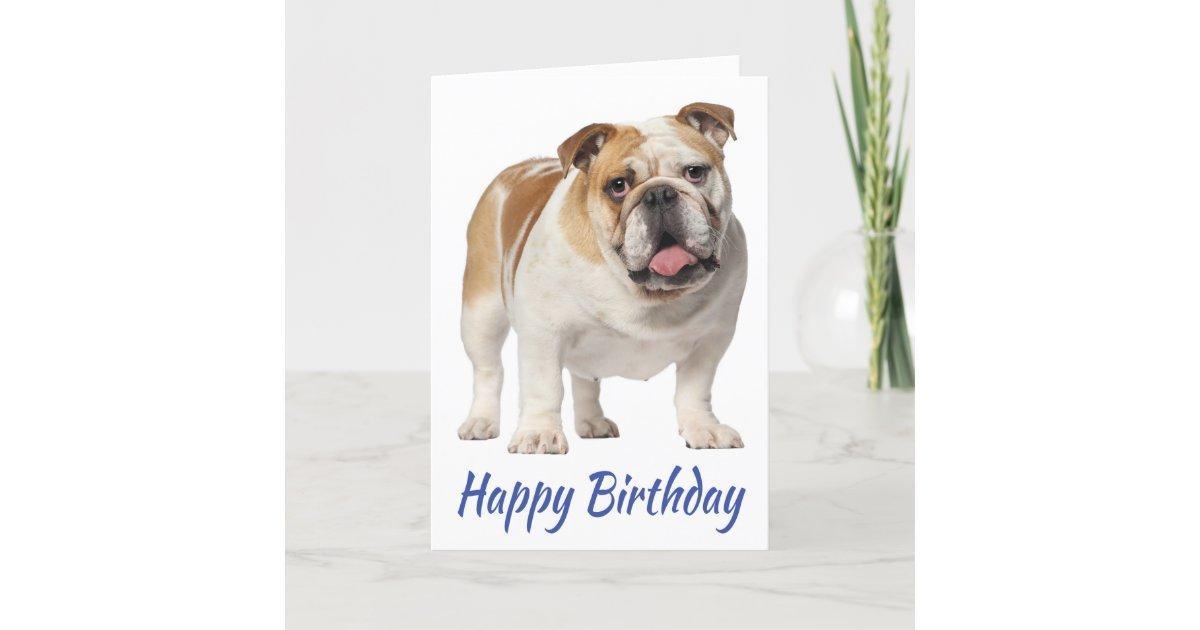 Happy Birthday English Bulldog Puppy Dog Card | Zazzle.com