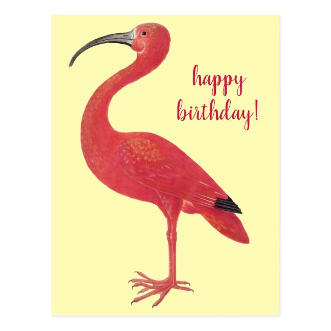Happy Birthday Flamingo | Fine Art Yellow Postcard