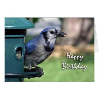 Happy Birthday for Bird Lover, Blue Jay at Feeder Card