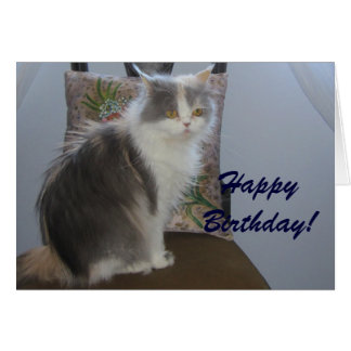 Happy Birthday for cat lovers Card