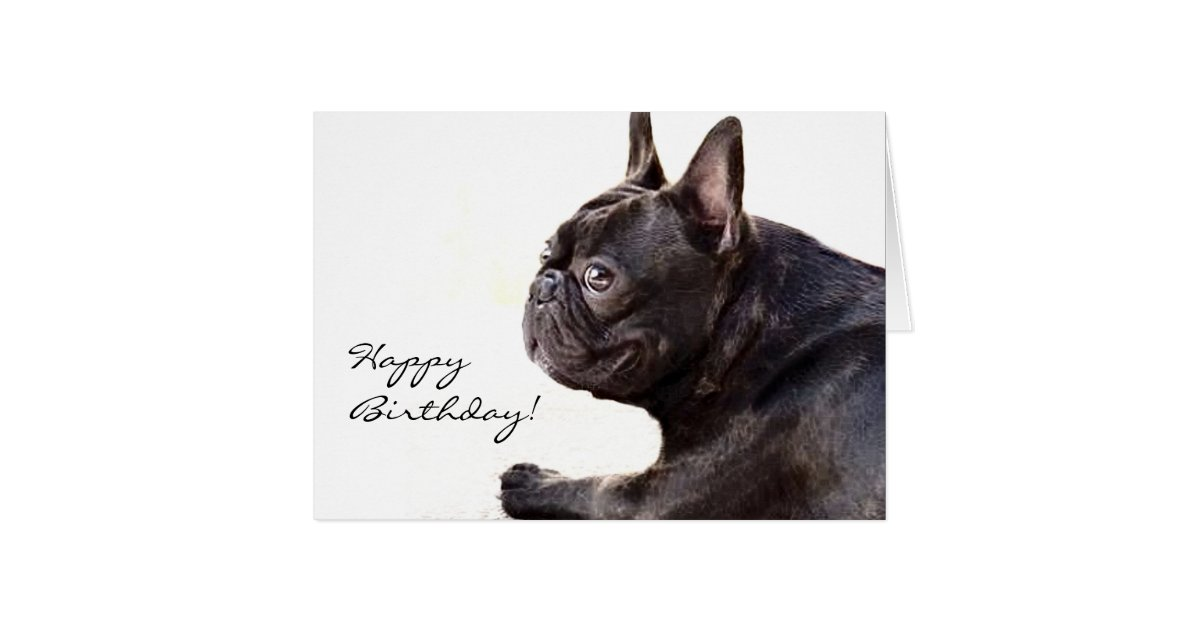 Happy Birthday French Bulldog card | Zazzle