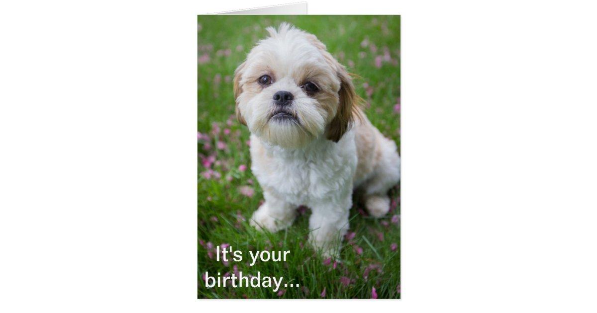 happy birthday images with shih tzu