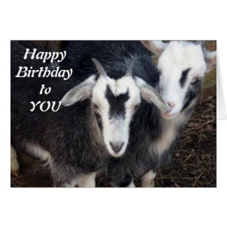 HAPPY BIRTHDAY FROM HAPPY PIGMY GOAT COUPLE CARD