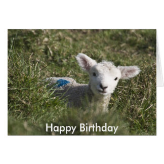 Happy birthday from me to ewe greeting card