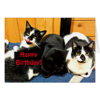 Happy Birthday From Your Cat Collection - Card