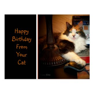 Happy Birthday From Your Cat Greeting Postcard