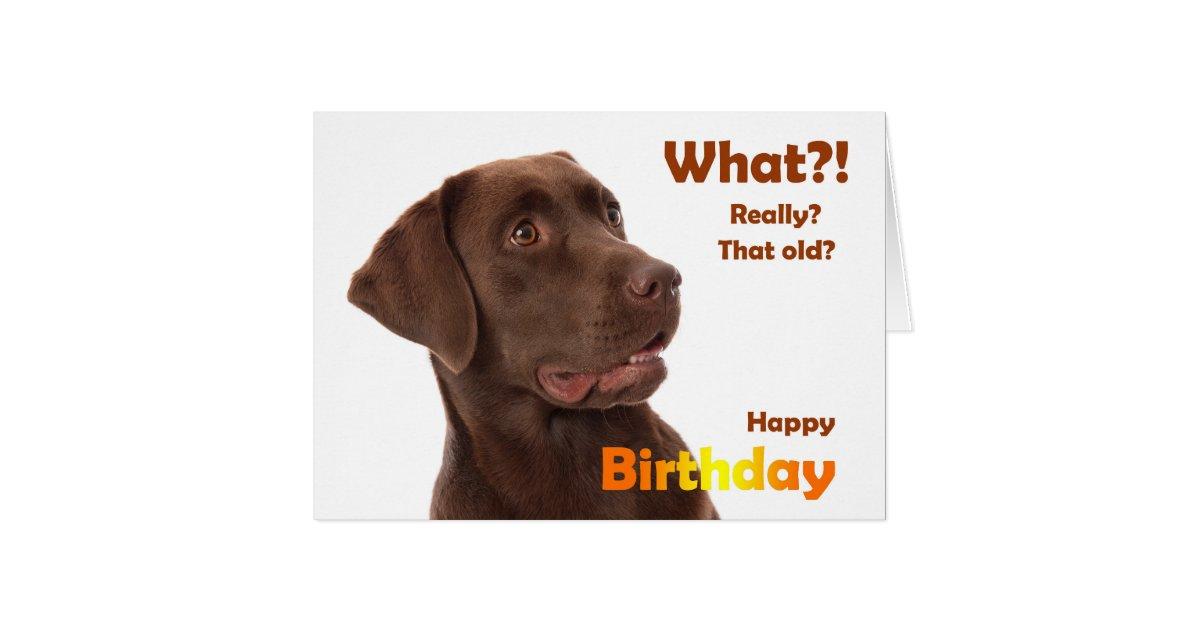 Happy Birthday fun card with Labrador dog | Zazzle