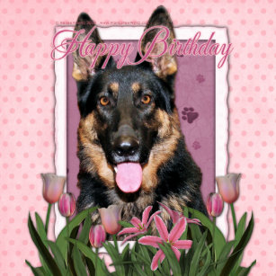 German Shepherd Lovers Birthday Gifts On Zazzle