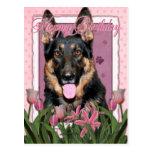 Happy Birthday - German Shepherd - Kuno Post Card
