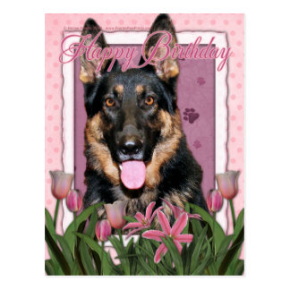 Happy Birthday - German Shepherd - Kuno Postcard