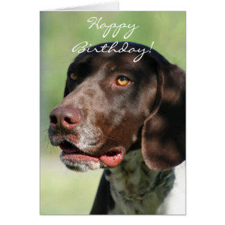 Happy Birthday German Shorthaired Pointer Greeting Cards