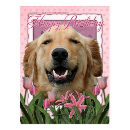 Happy Birthday - Golden Retriever - Mickey Postcard