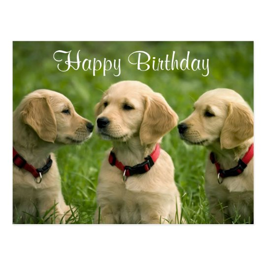 Happy Birthday Golden Retriever Puppies Postcard Zazzle Com