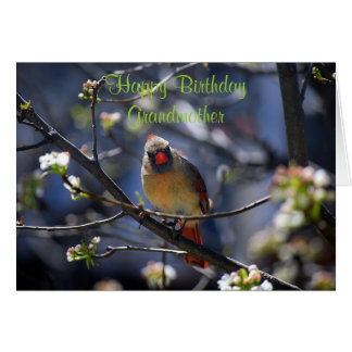 Happy Birthday Grandmother Female Cardinal Card