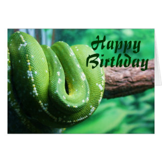 Happy Birthday Green Tree Python Card