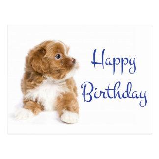 Happy Birthday Havanese Puppy Dog Postcard