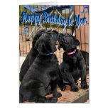 Happy Birthday Honor Litter Trio Greeting Card