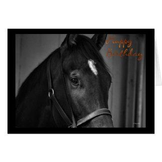 Happy Birthday horse card Birthday wishes