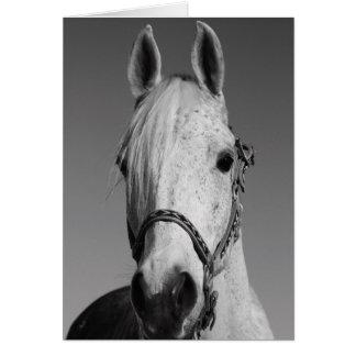 Happy Birthday horse greeting card