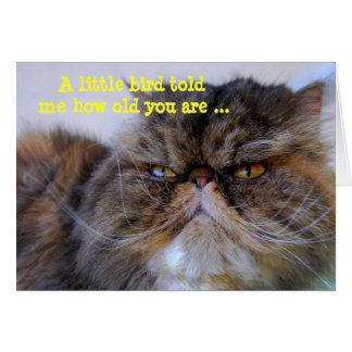 Happy Birthday Humor Calico Persian Kitty Card