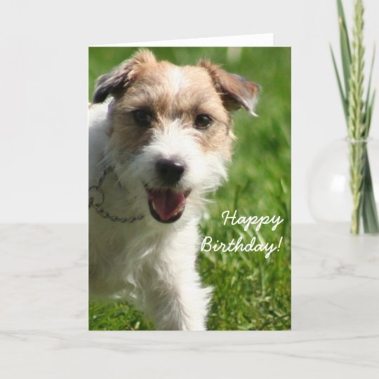 Happy Birthday Jack Russell Terrier Greeting Card Zazzle