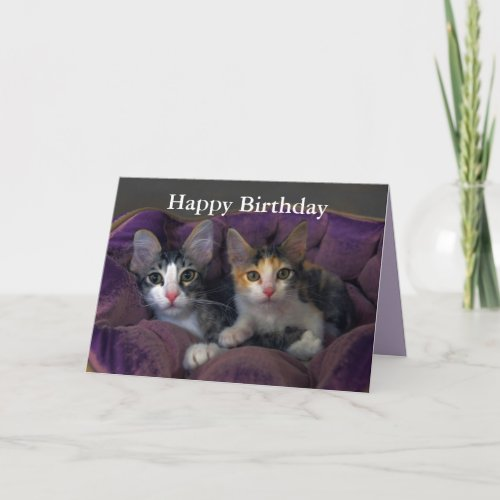 Happy Birthday Kitten Pair in a Purple Bed Card