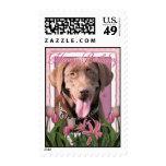 Happy Birthday - Labrador - Chocolate Stamp