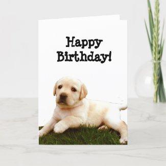 Happy Birthday Labrador puppy greeting card card