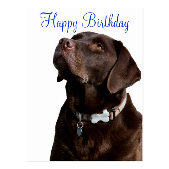 Happy Birthday Labrador Retriever Dog Post Card | Zazzle.com