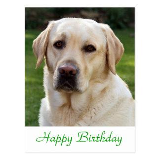 Happy Birthday Labrador Retriever  Dog Post Card