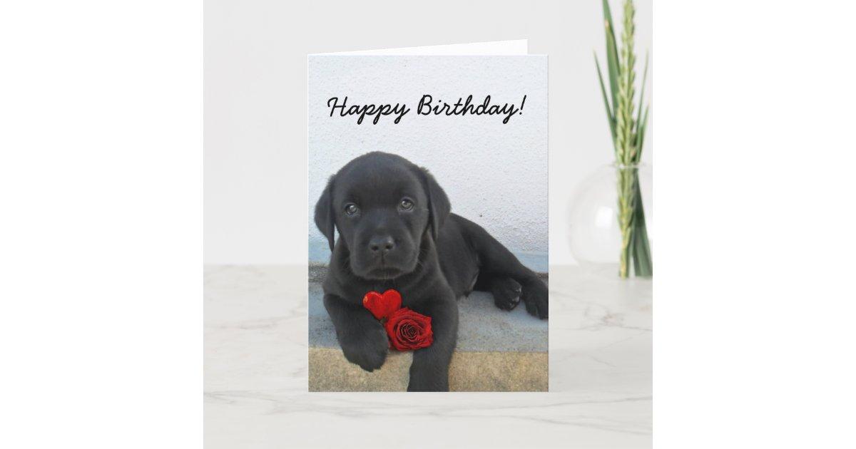 Happy Birthday Labrador Retriever greeting card   Zazzle.com