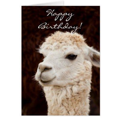 Alpaca Happy Birthday Cards Zazzlecom