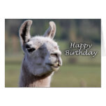 Happy Birthday llama | llama happy birthday Greeting Cards