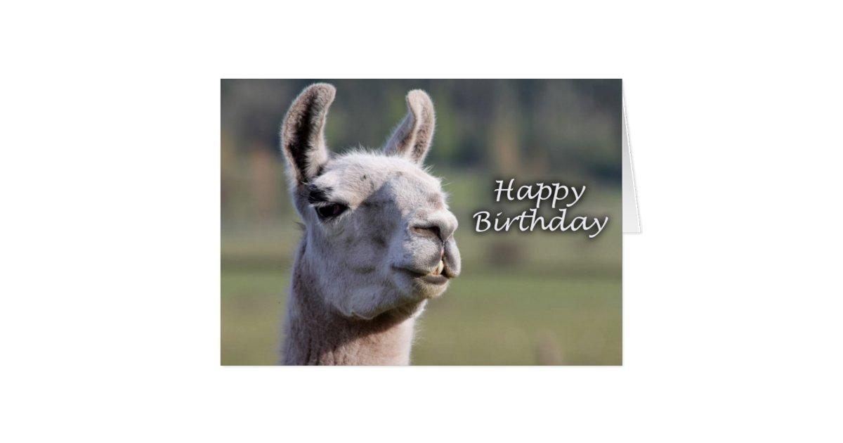 happy birthday llama